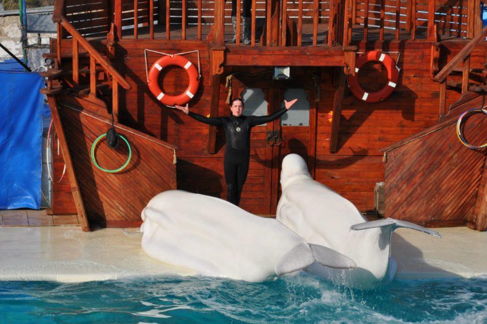 киты-белухи