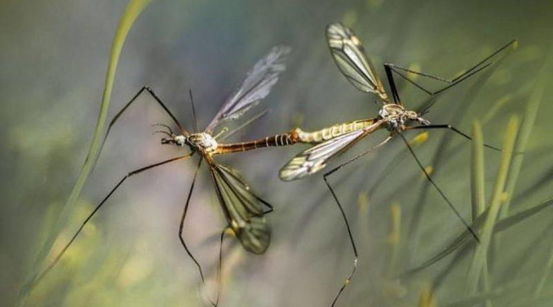 Есть ли в Крыму комары